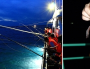 Squid fishing in Halong Bay - Online Vietnam visa service