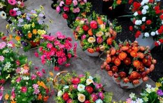 Spring Flower Fairs in Hanoi - Vietnam visa