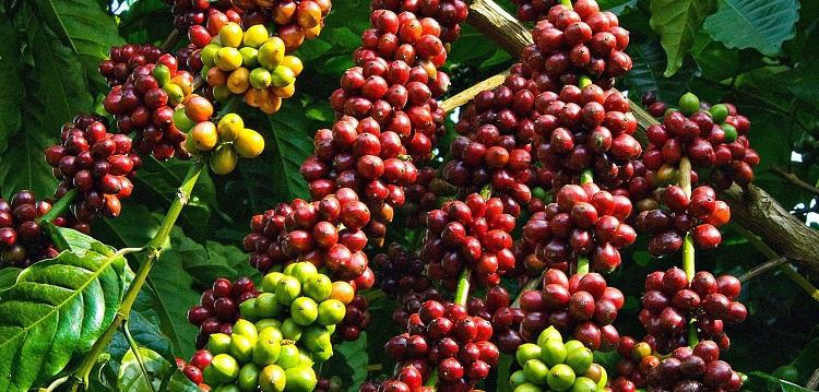 Vietnam coffee - Vietnam visa