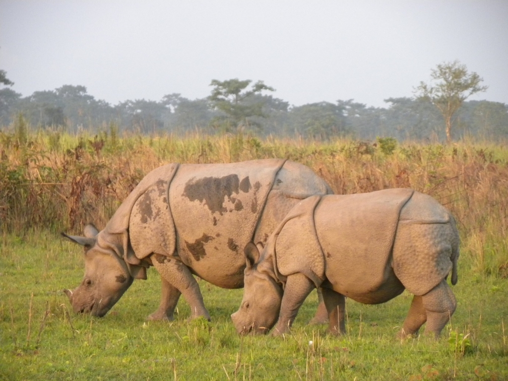 India - country of Rhino - Vietnam visa